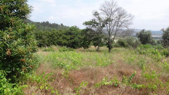 Terrenos QUINTA DA TABOADELA