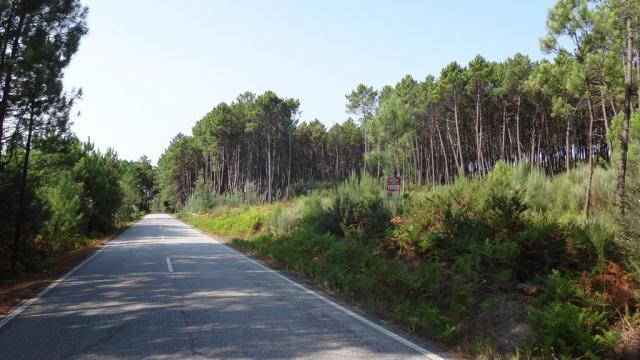 Terreno junto á estrada n229-2 Douro Calvo